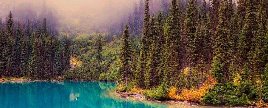 Au Québec, la forêt est un moteur de développement durable