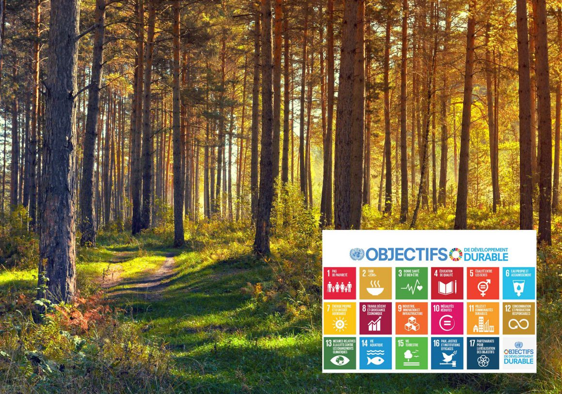 Le développement durable et la forêt