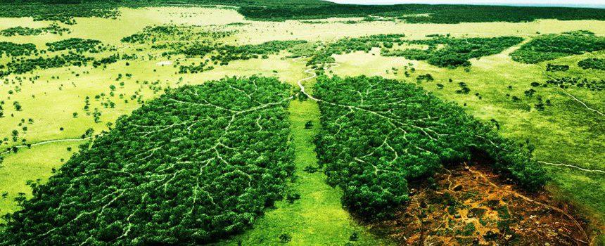 Cinq bonnes raisons d'adopter une stratégie RSE avec EcoTree